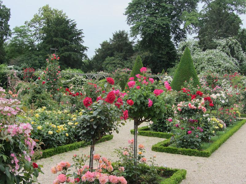Beautiful Rose Gardens The Image Kid