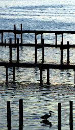 Heron Docks