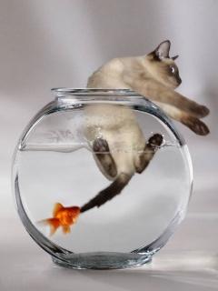 http://3.bp.blogspot.com/-1te_fkITdrE/Tl_M6cbsIlI/AAAAAAAABno/Oi7ue5-5Ayo/s1600/funny+fish+bitecat.jpg