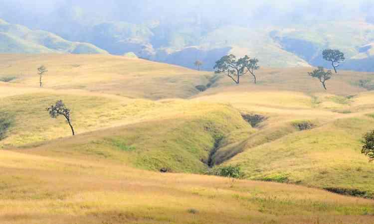 Rinjani: Gunung Dengan Padang Savana Eksotis di Lombok