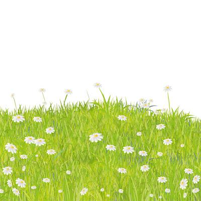 Summer Grass vector background