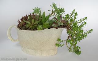 Drugie życie starej sosjerki, kompozycja roślinna z sukulentów Wallpaper 4K 3840x2160 1920x1200 tapeta