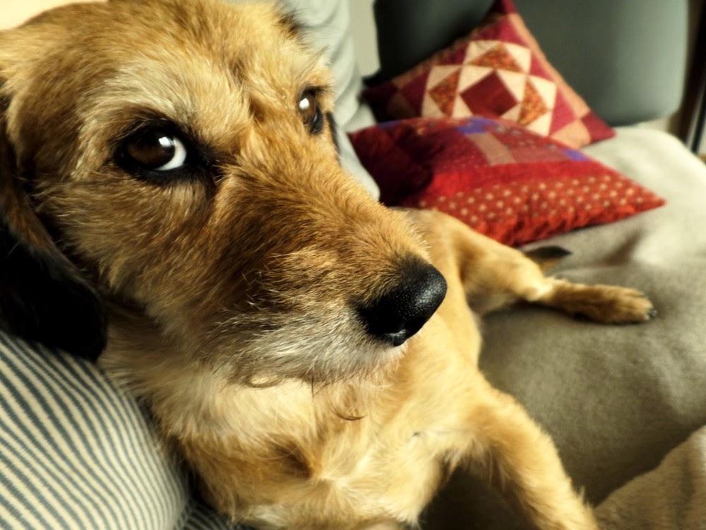 Pillowtree Keine Kleinen Hunde Auf Dem Sofa