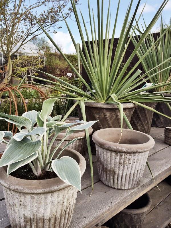 träslövs trädgård i varberg, varbergstips, tips, trädgård, trädgårdsmästare, växter, utomhus,
