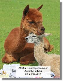 Alpaka Grundlagen Seminar Juni 2017