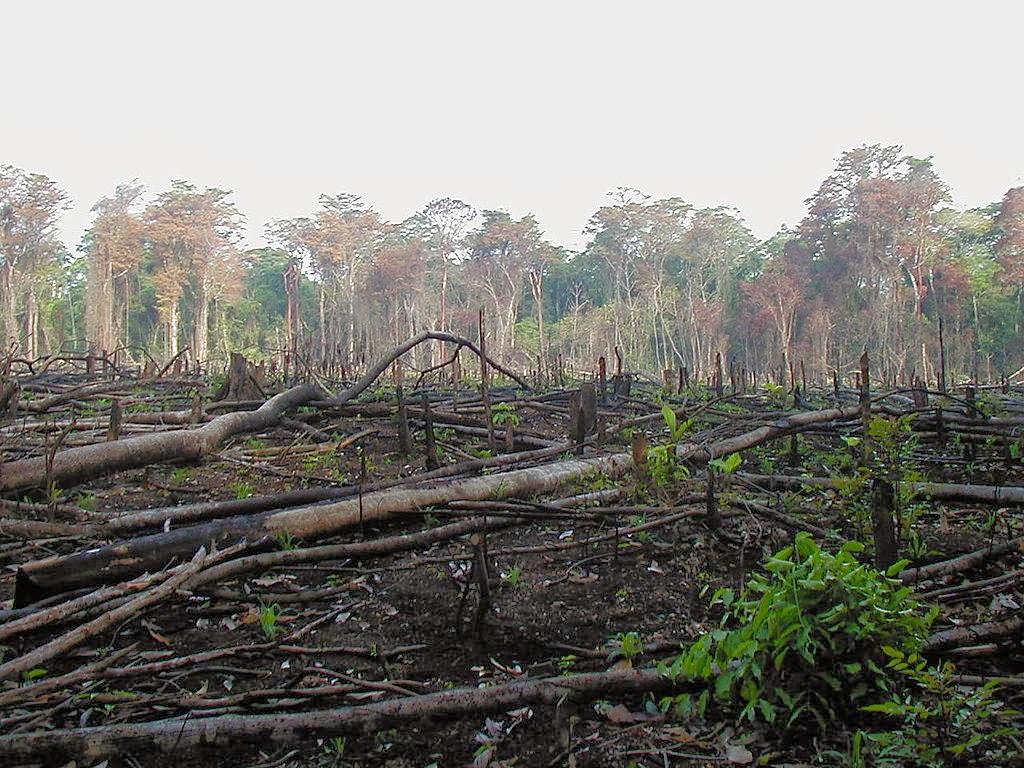 Consecuencias negativas de la deforestación