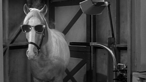 10 Celebrity Horses Who Have Shaped Our Lives