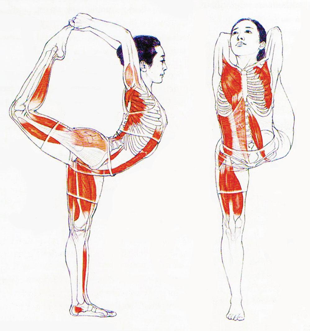 Armonía & Espiritualidad: Seminario de Anatomía para el Yoga ...