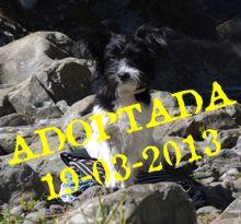 Laya Adoptada