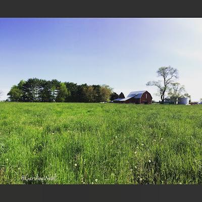 Weihl Farms