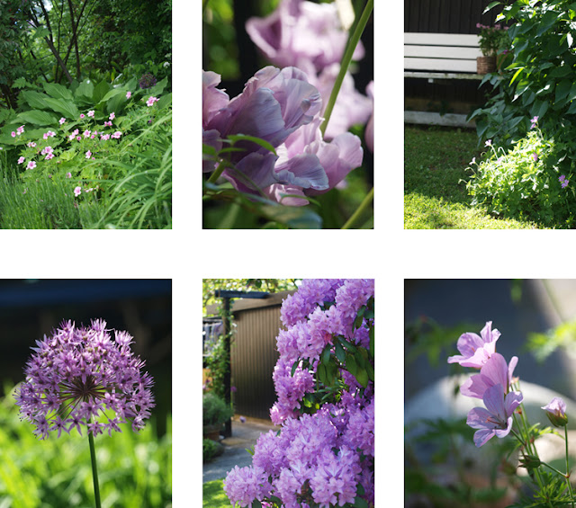 Lilla blomster i haven er storkenæb, rhododendron, allium, tulipaner og geranier