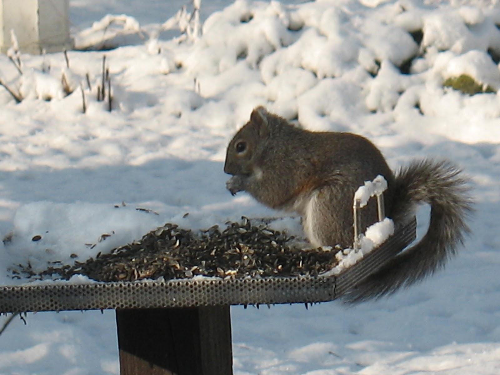 Artsy Endeavors: Animal Wednesday - Snow Animals