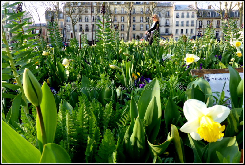 Spring flowers Versailles