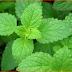 Ini dia 6 herba Bermanfaat yang Perlu Ditanam di Rumah