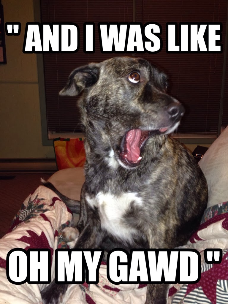 Funny Meme Pictures Of Dogs : And i was like dr heckle