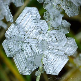 Hoar-frost ice crystal (c) John Ashley