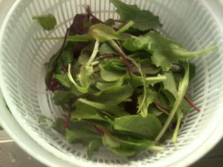 salad spinner with fresh salad leaves