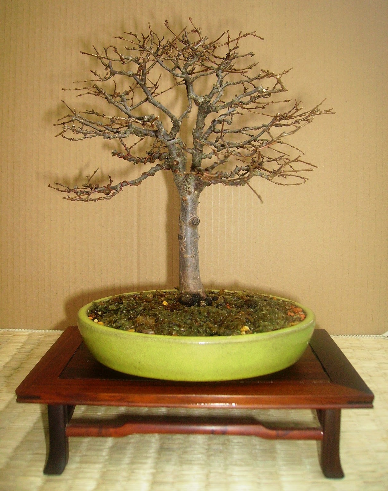 Bespoke Bonsai Stands New Display Stands Added To The QuotItems For