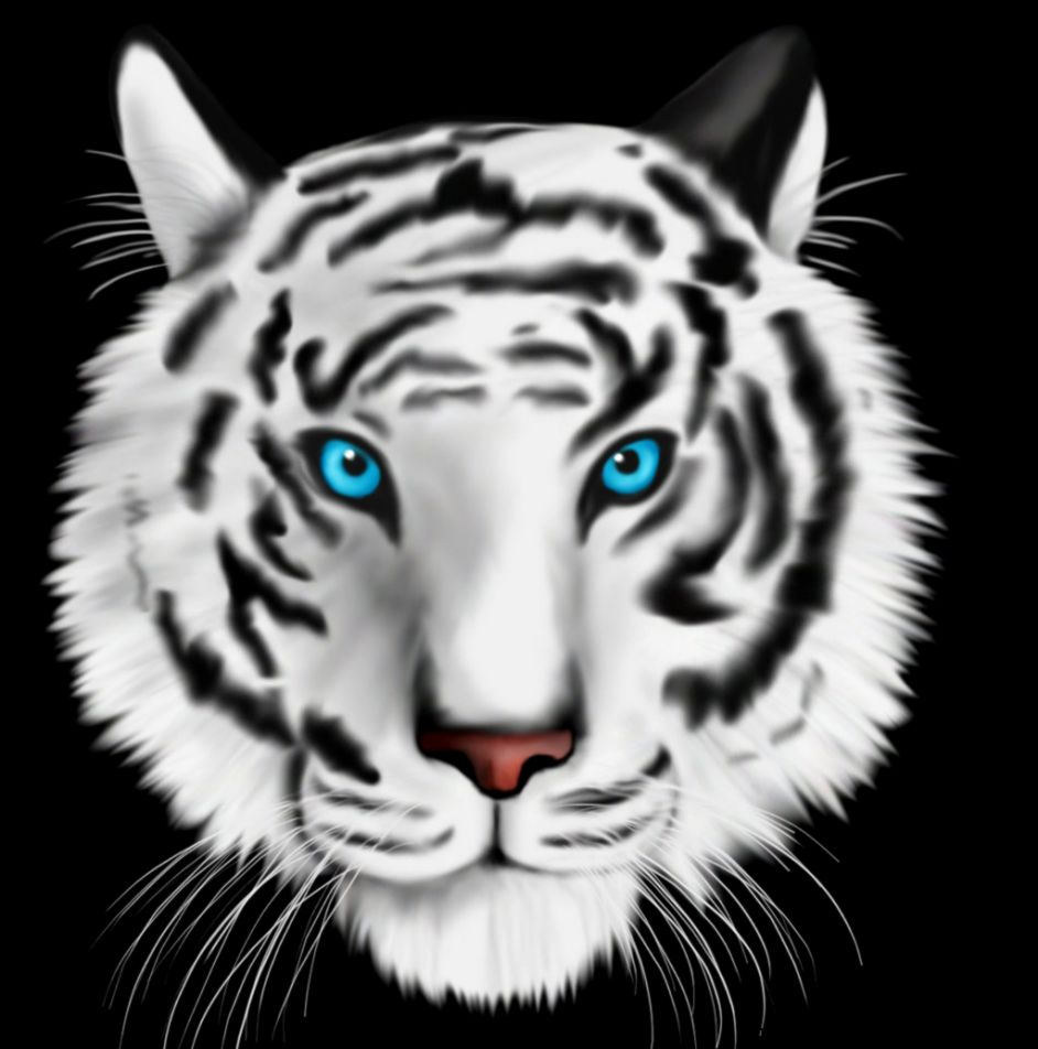White Tigers With Blue Eyes Drawings   Gallery