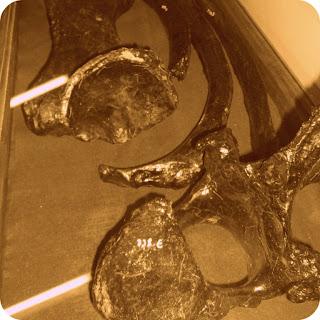 Ossos de Megatério, a Preguiça Gigante, Centro de Cultura de Caçapava do Sul
