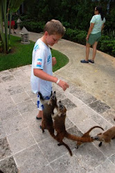 Number one son feeding the wildlife in Mexico