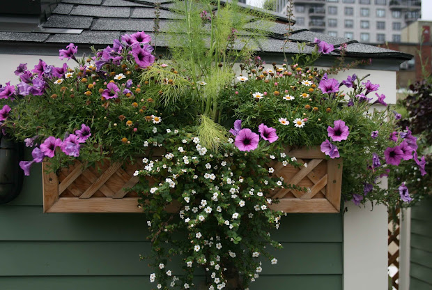 Ideas for Window Boxes Full Sun Flowers