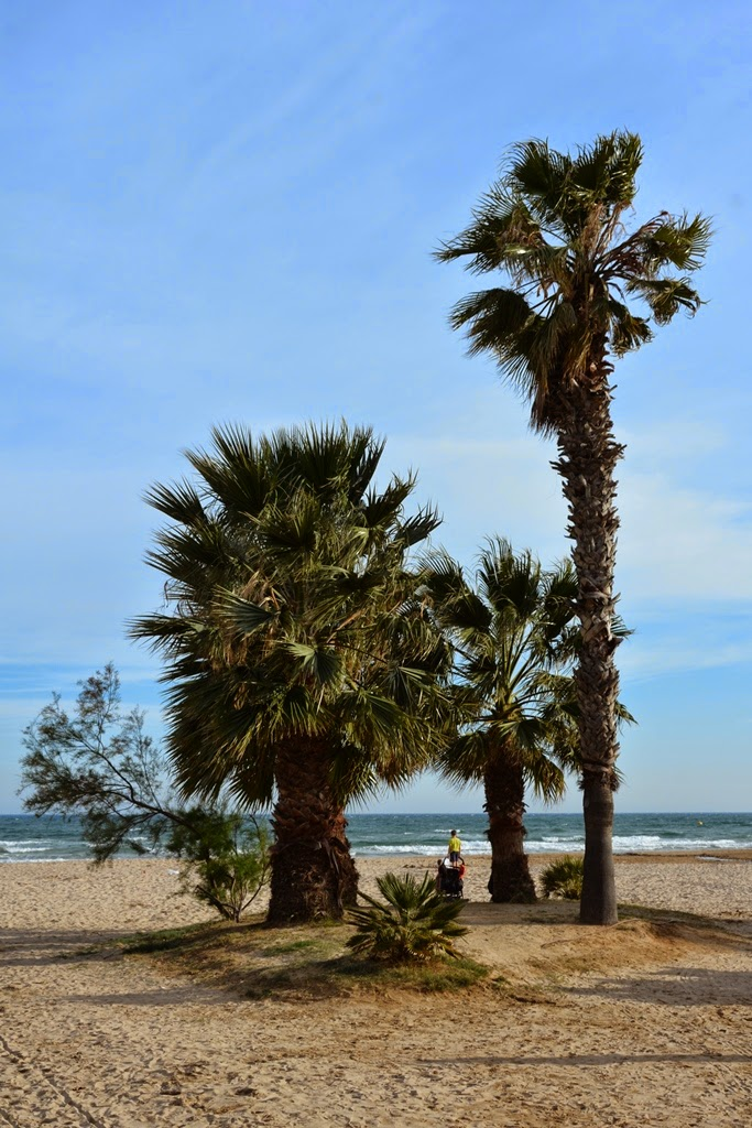 Cambrils palm trees