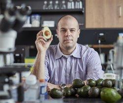 Abacates têm substância que ataca a leucemia