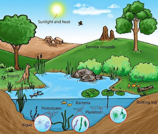 Pengertian Ekosistem, Komponen, dan Macam-macam Ekosistem Lengkap