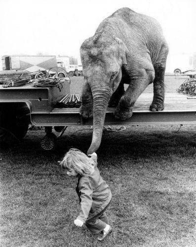 kadın kadındır, fil babandır ?
