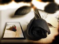 Frase de Amor, Frase de Carinho, Camões, Amor, Legião Urbana, É o amor, Contentamento