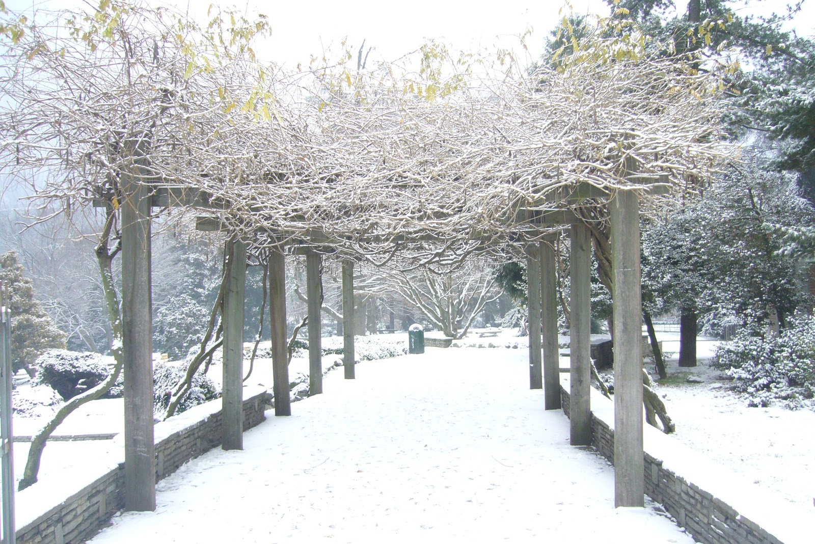 Alice corsi il giardino d 39 inverno di maria c - Il giardino d inverno ...