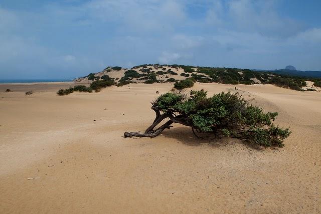 dune piscinas
