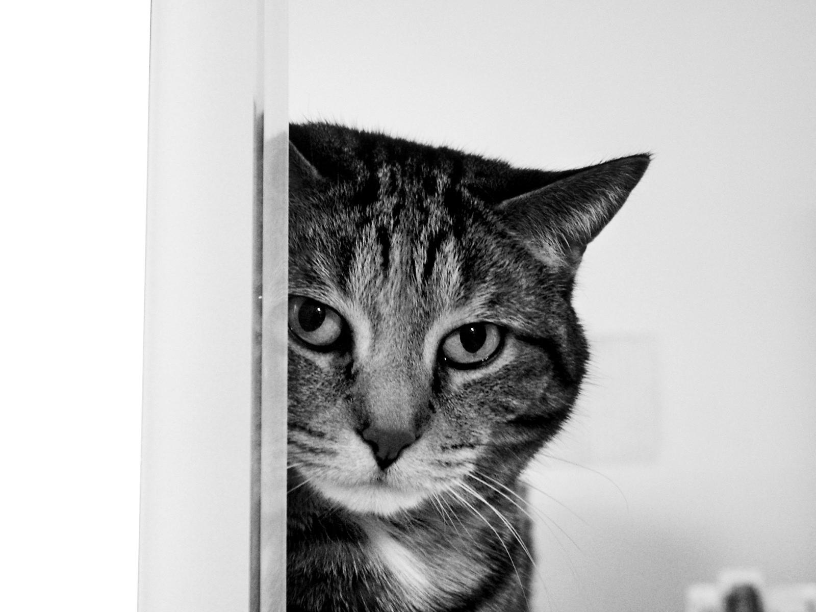 http://3.bp.blogspot.com/-1yJQ7mqPVPE/UDCTzwXWDaI/AAAAAAAAAO4/bFMURPzSNAo/s1600/Top+20+Cute+Animals+Pics5.jpg