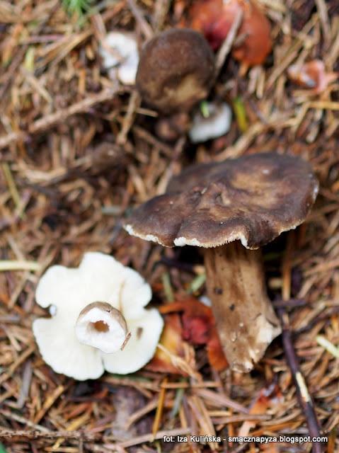 grzyby gatunkami , atlas grzybów , prosto z lasu , las , poznaj nowe gatunki , grzybobranie ,  na grzyby