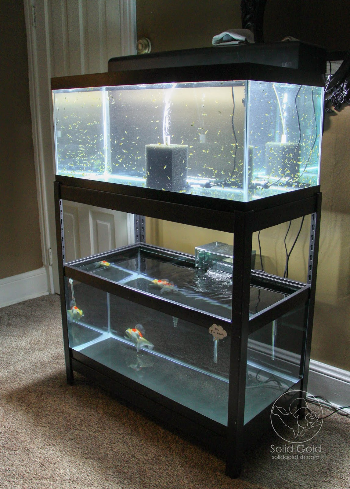 The perfect rack for 40 gallon tanks solid gold aquatics for Bookshelf fish tank