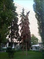 Институт Хирургии имени Вишневского Росмедтехнологий. Главный Лабораторно-клинический корпус