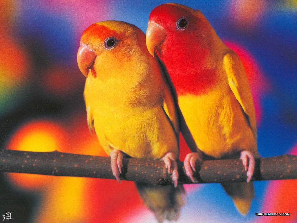 Love Bird Quotes Funny Pictures Gallery Quotes Birds Bird Quotes.