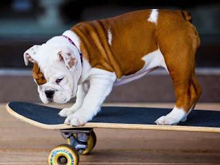 Foto Anak Anjing Buldog