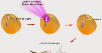 Apuntes de Biología Molecular: Oncogenes, protooncogenes y ... Ant
