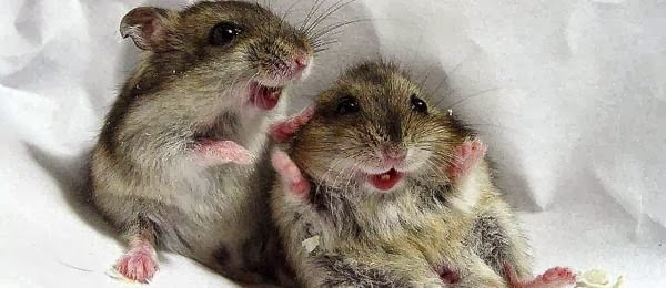 funny cute mouse information amp latest pictures funny and cute