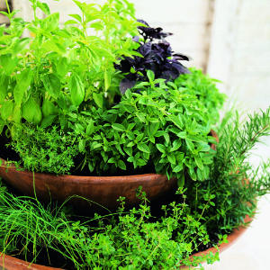 Design kitchen garden ideas tips in pakistan india for Soil meaning in hindi