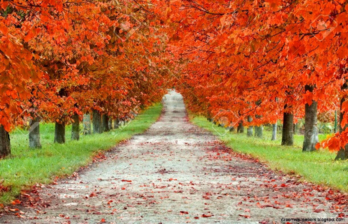 Autumn Boulevard Stock Photo Picture And Royalty Free Image
