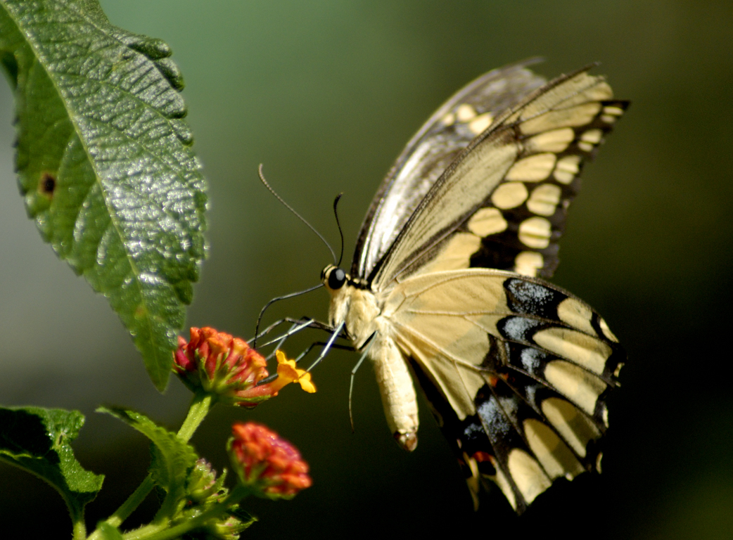 Butterflies walpaper |Funny Animal Pictures Of Butterflies