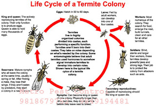 Termites Colonies survived