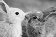 10 Adorable Pictures Of Animals In Love For Valentine's Day