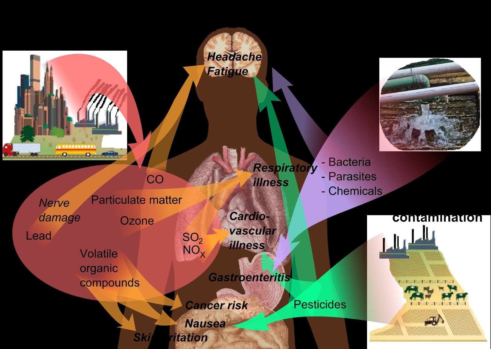 environmental health and health effects of Environmental health epidemiology bureau welcome to the new mexico department of health (nmdoh) environmental health epidemiology bureau (eheb) website.