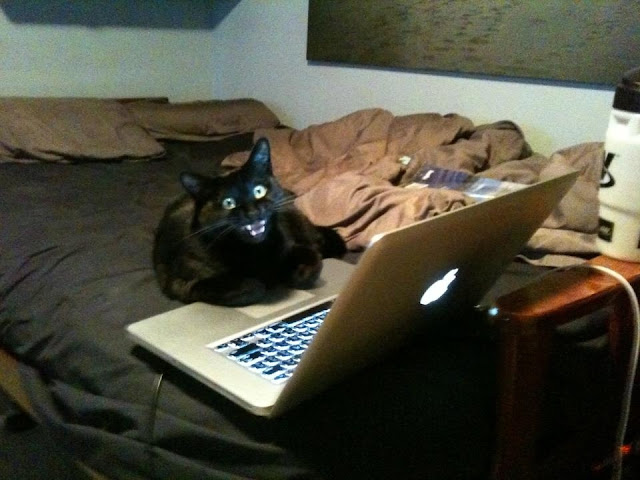 cat and laptop, funny cat photos