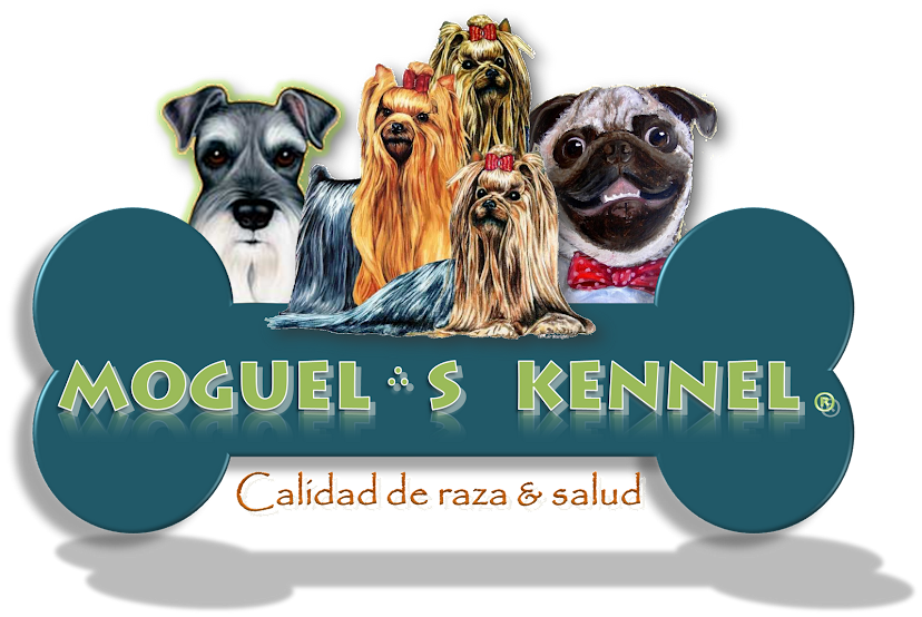Moguel´s Kennel