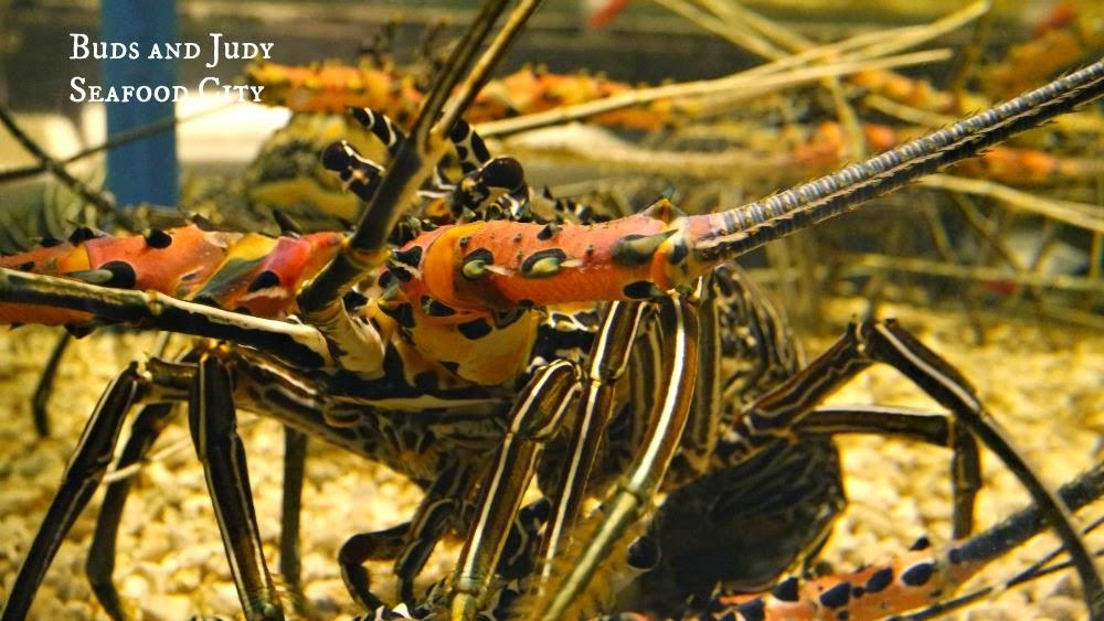 Seafood City. Seafood Restaurant in Cebu City, lobster
